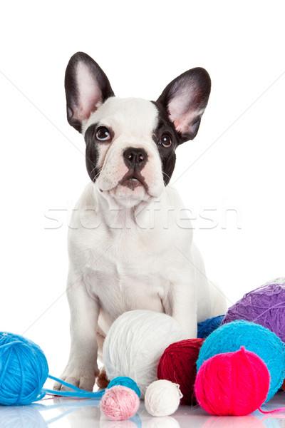 幸せ 子犬 フランス語 ブルドッグ 白 犬 ストックフォト © EwaStudio
