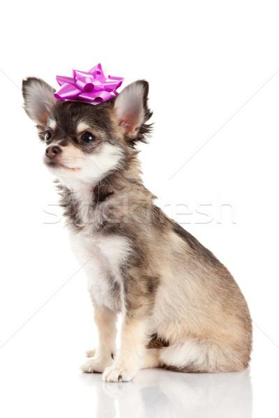 щенков Cute собака белый фон портрет Сток-фото © EwaStudio