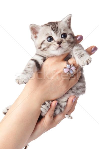 Kätzchen weiß Hintergrund funny jungen Tier Stock foto © EwaStudio