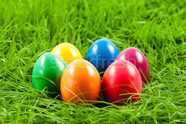 Easter Eggs świeże zielona trawa Wielkanoc wiosną trawy Zdjęcia stock © EwaStudio