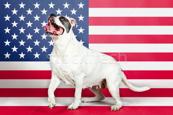 Американский бульдог флаг природы листьев звездой американский флаг Сток-фото © EwaStudio