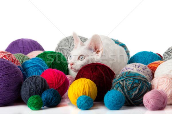 猫 白 子猫 背景 楽しい ストックフォト © EwaStudio
