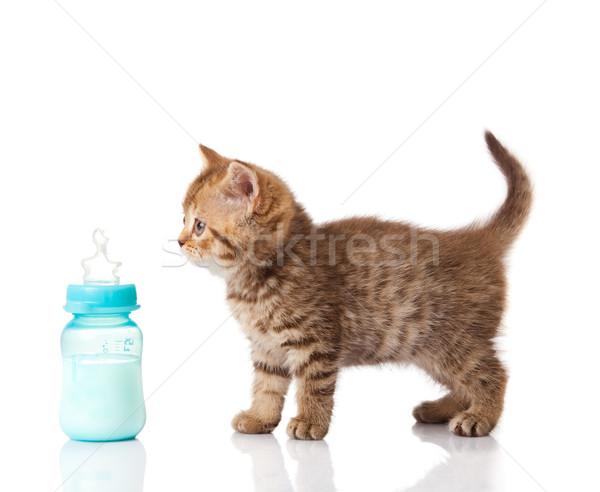 Stock photo: British Kitten and baby milk bottle on white background.