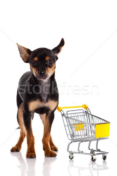 Chihuahua dog  with shopping cart Stock photo © EwaStudio