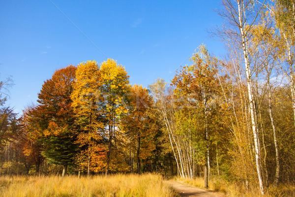 Outono paisagem floresta colorido árvore grama Foto stock © EwaStudio