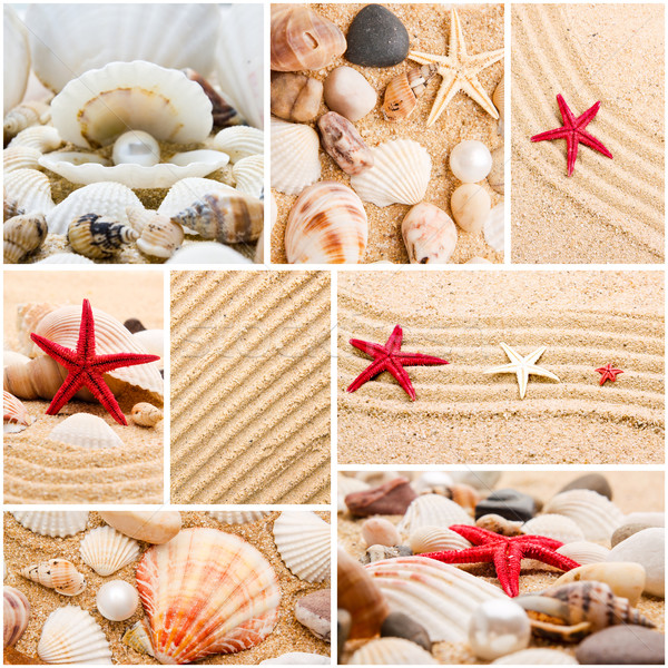 Collage of summer seashells. collection of seashells. pearl on t Stock photo © EwaStudio