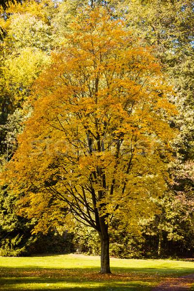 Gyönyörű ősz színes tájkép égbolt erdő Stock fotó © EwaStudio