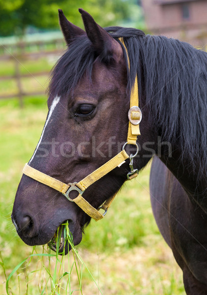 Portrait of Horse Stock photo © EwaStudio