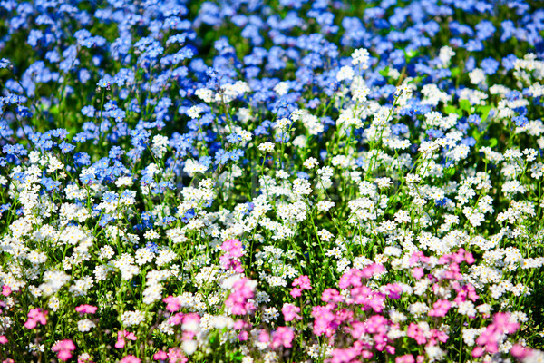 весенние цветы трава солнце лист саду лет Сток-фото © EwaStudio