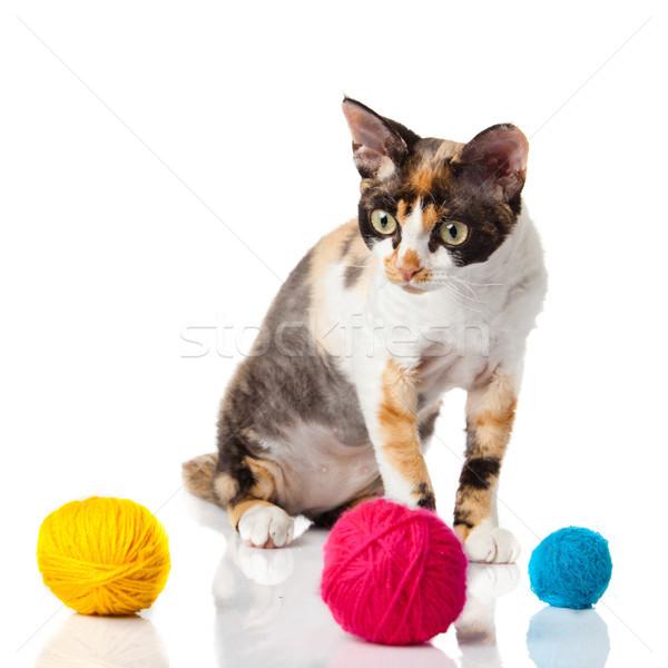 Cat Devon Rex on white background. kitten with balls of threads  Stock photo © EwaStudio