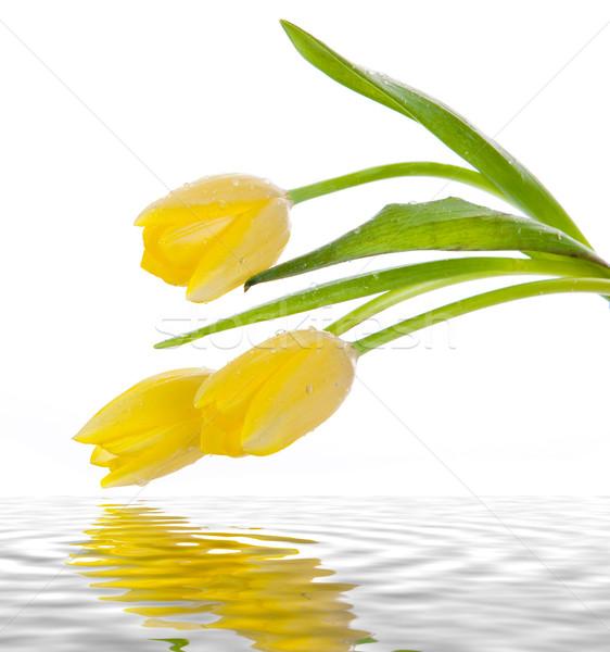 Gyönyörű virágcsokor citromsárga tulipánok fehér húsvét Stock fotó © EwaStudio