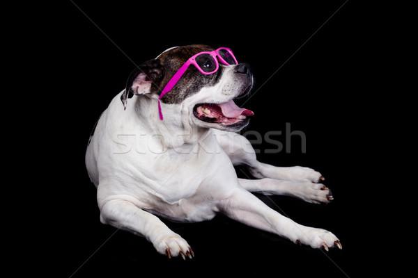 собака очки черный Американский бульдог глазах Сток-фото © EwaStudio