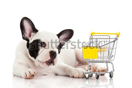 French Bulldog with shopping cart isolated on white. Funny littl Stock photo © EwaStudio