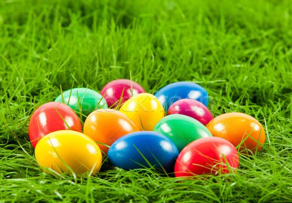 Paskalya yumurtası taze yeşil ot Paskalya bahar çim Stok fotoğraf © EwaStudio