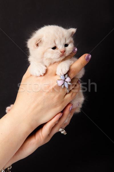Pequeno gatinho mão amor gato fundo Foto stock © EwaStudio