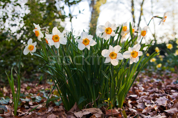 Bloemen bloem gras natuur tuin schoonheid Stockfoto © EwaStudio