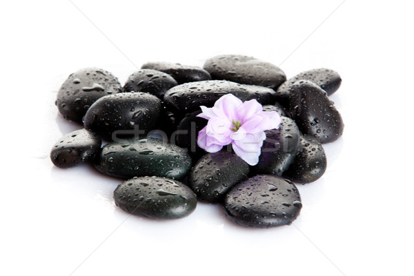 Spa stones with drops and  flowers isolated on white Stock photo © EwaStudio