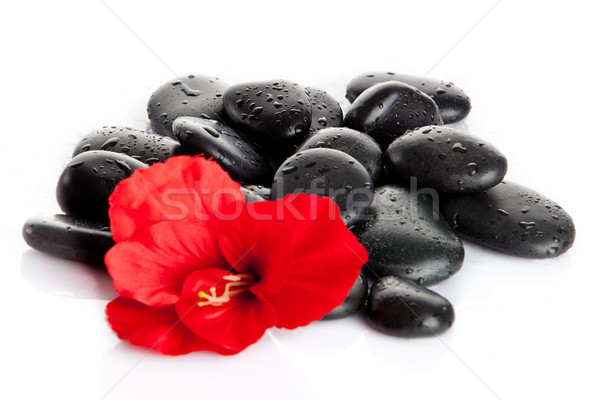 Spa stones and  red flower  isolated on white.  aromatherapy con Stock photo © EwaStudio