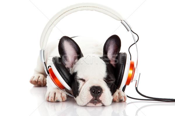 dog listening to music with headphones isolated on white backgro Stock photo © EwaStudio