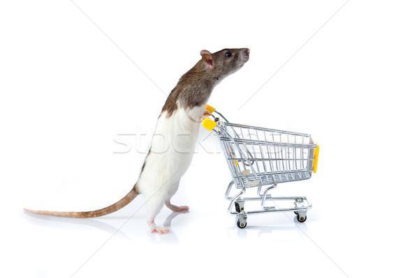 Animais de estimação carrinho animal mercado isolado Foto stock © EwaStudio