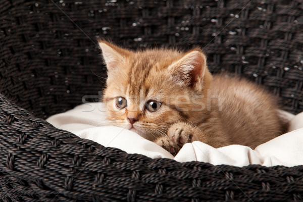 Katze schlafen legen Baby funny jungen Stock foto © EwaStudio