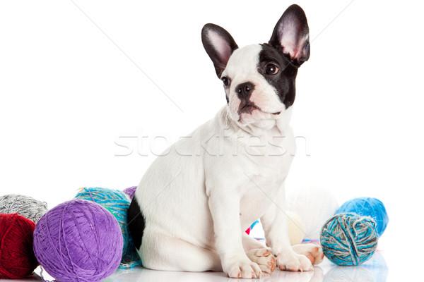 счастливым щенков французский бульдог белый собака Сток-фото © EwaStudio