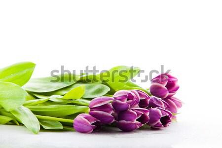 Isolado roxo tulipas páscoa folha dom Foto stock © EwaStudio