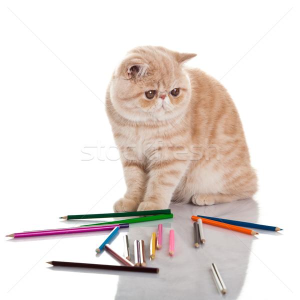 エキゾチック ショートヘア 猫 かわいい 子猫 演奏 ストックフォト © EwaStudio