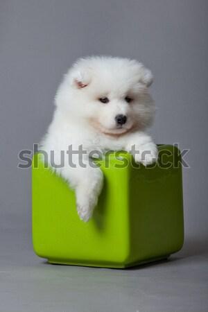 Hond schoonheid dieren dier mooie vriend Stockfoto © EwaStudio