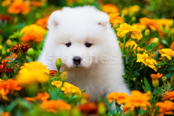 Hond landschap tuin veld onderwijs groene Stockfoto © EwaStudio