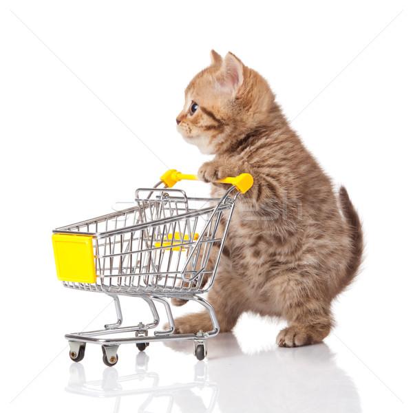 Britisch Katze Warenkorb isoliert weiß Kätzchen Stock foto © EwaStudio