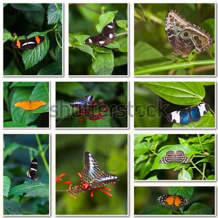Butterflies collection Stock photo © EwaStudio