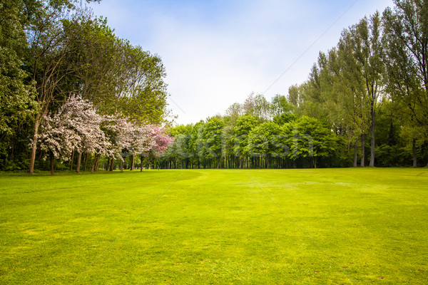 green field and trees.  Summer landscape with green gras Stock photo © EwaStudio