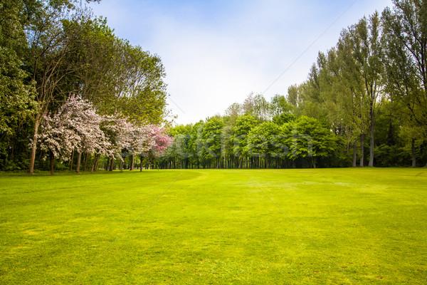 Verde campo árvores verão paisagem árvore Foto stock © EwaStudio