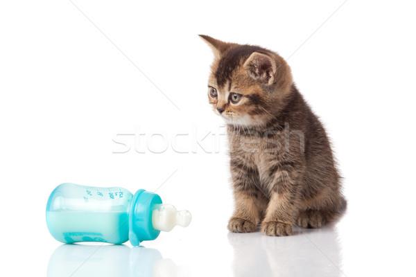 Сток-фото: британский · котенка · ребенка · молоко · бутылку · белый