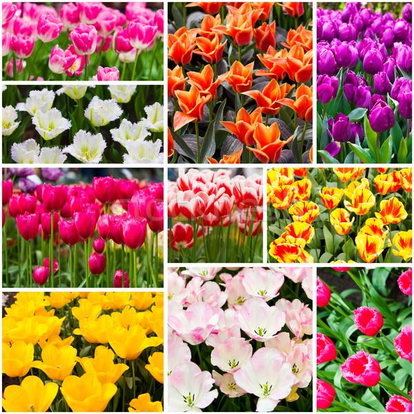 Tulipes collage fleurs du printemps nature été vert Photo stock © EwaStudio