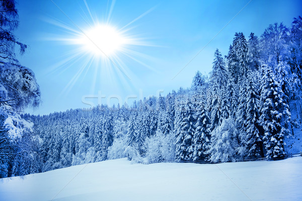 Trees covered with hoarfrost. Beautiful winter landscape with sn Stock photo © EwaStudio