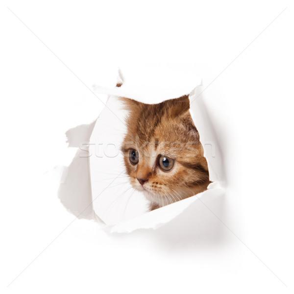 Gatinho papel gato parede engraçado Foto stock © EwaStudio