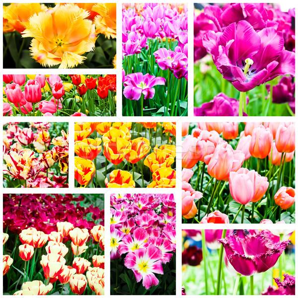 Flores da primavera tulipas flor verão verde tulipa Foto stock © EwaStudio