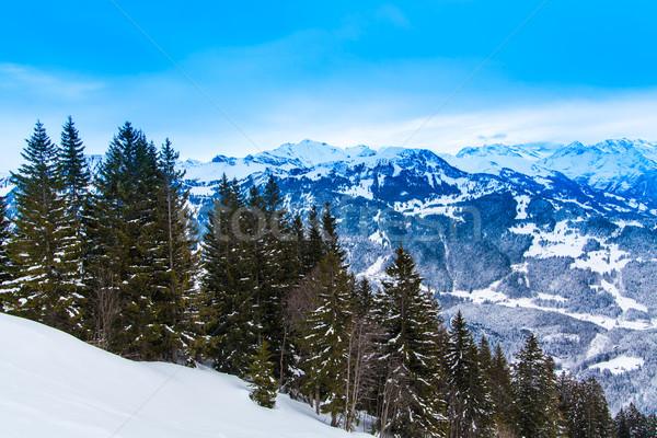 зимний сезон пейзаж дерево природы снега горные Сток-фото © EwaStudio