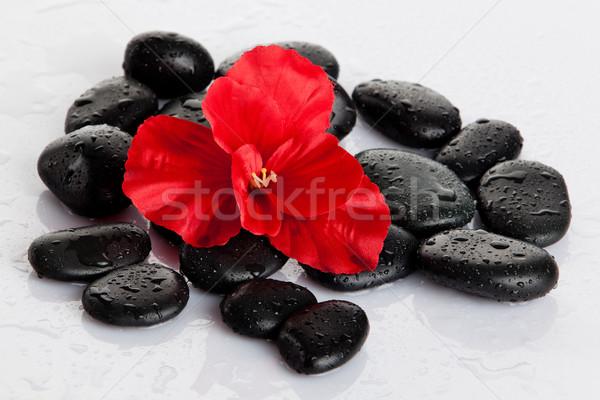 Estância termal pedras vermelho flor isolado branco Foto stock © EwaStudio