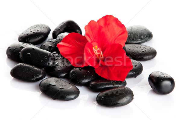 Stockfoto: Spa · stenen · Rood · bloem · geïsoleerd · witte