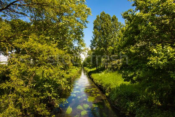 Verão rio brilhante blue sky nuvens primavera Foto stock © EwaStudio