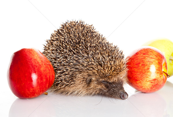 hedgehog with an apple.  hedgehog isolated. Stock photo © EwaStudio