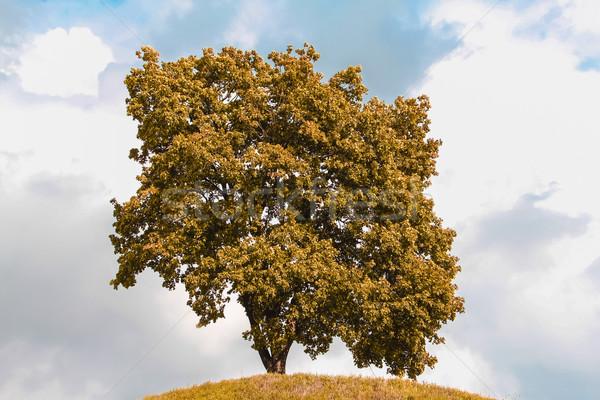 Single  tree in the autumn Stock photo © EwaStudio