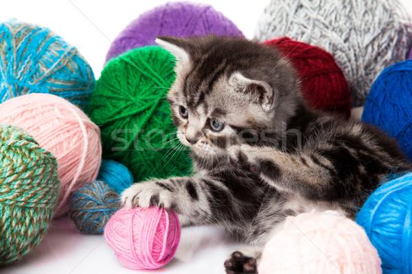 kitten with balls of threads. little kitten on white background. Stock photo © EwaStudio