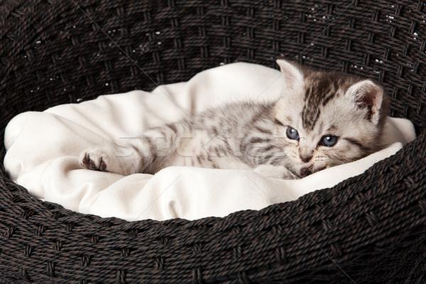 Gato adormecido cesta bebê engraçado jovem Foto stock © EwaStudio