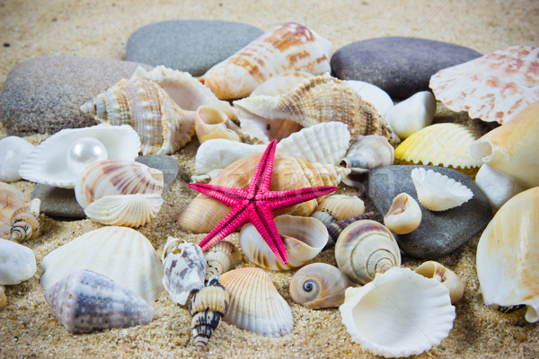 The exotic sea shell . treasure from the sea. Stock photo © EwaStudio