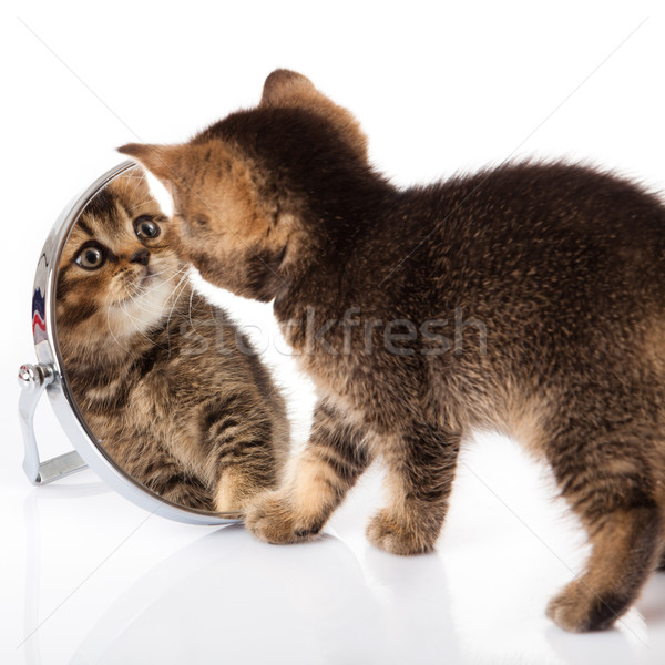 Gatinho espelho branco bebê olhos Foto stock © EwaStudio