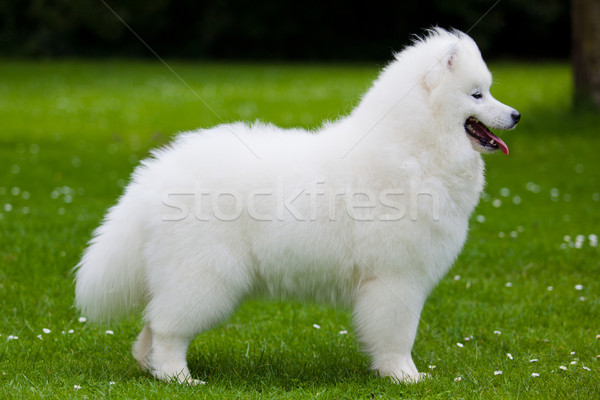 Hond tuin veld onderwijs groene hoofd Stockfoto © EwaStudio